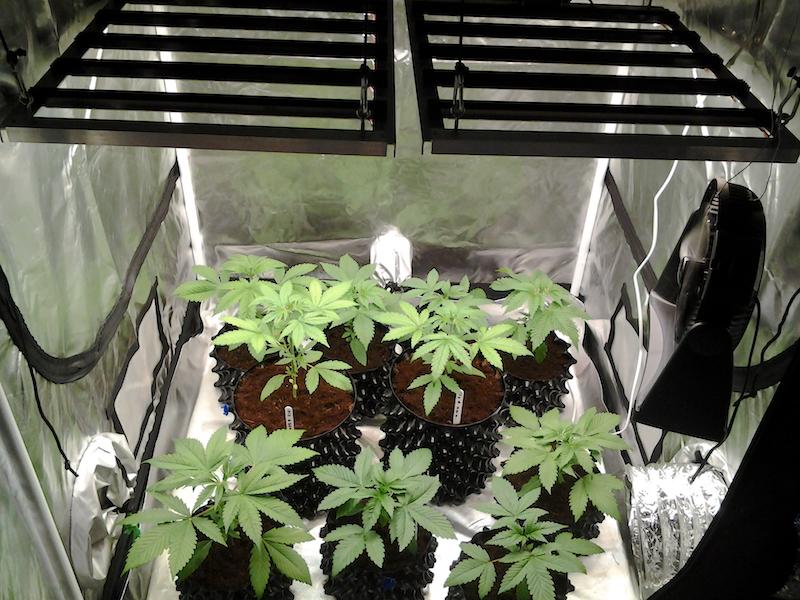 Dual SolStix Rax vegging